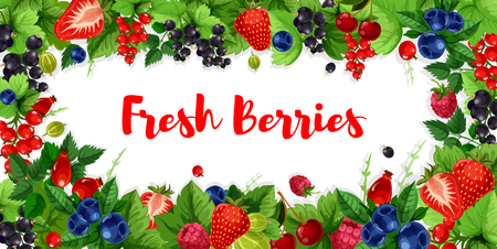 딸기 딸기, 라스베리 또는 블랙 커런트 및 붉은 건포도 또는 크랜베리의 딸기 배너. 벡터 디자인 신선한 수확, 체리와 블랙 베리 또는 유기 베리 시장에 일러스트