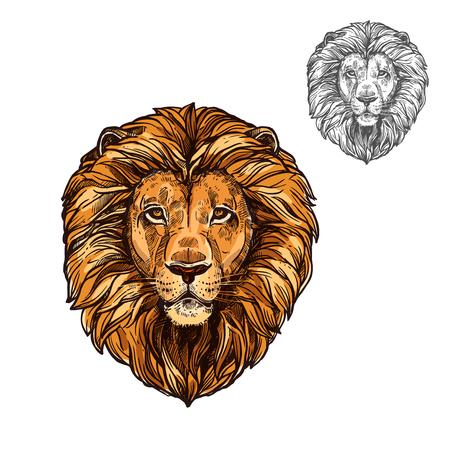 사자 아프리카 야생 동물 머리 또는 총구 스케치. 벡터 팬더 레오 종의 고립 된 아이콘 동물학, 마스코트 고양이 스포츠 팀, 야생 동물 사바나의 blazon