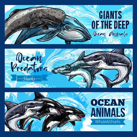 oceanarium: Ocean giant predatory animals banners set. Vector design of sperm whale cachalot, killer whale or orca and hammerhead or white shark and toothed predator fishes and marine mammals