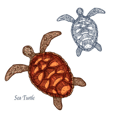 Turtle sketch vector icon. Sea reptile animal species of tortoise or terrapin with cartilaginous carapace shell. Isolated fauna and zoology symbol or emblem for fishing club or fishery seafood market