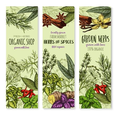 ショップや調味料市場のバナーをハーブやスパイス。ベクトル有機セージ、ベイリーフ、タイムやバジル、ペパーミント。自然のハーブのスパイシ