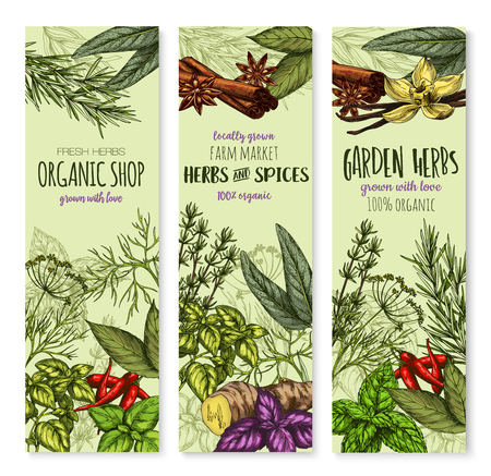 Herbs and spices banners for shop or seasonings market. Vector organic sage, bay leaf and thyme or basil and peppermint. Natural herbal spicy ginger, oregano and chili pepper or tarragon and rosemary Ilustração