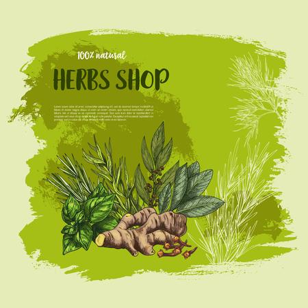 Pices et herbes vector affiche pour la boutique du marché de la ferme des assaisonnements cultivés et de jardin origan, sauge naturelle ou basilic rouge et le thym ou le romarin, la feuille de laurier, le gingembre et la menthe poivrée ou poivre noir Banque d'images - 80571858