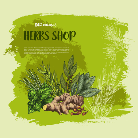 Spices and herbs vector poster for shop of farm market of grown and garden seasonings oregano, natural sage or red basil and thyme or rosemary, bay leaf, ginger and peppermint or black pepper