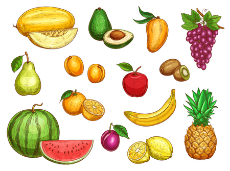 Vector exotic fresh fruits isolated icons set