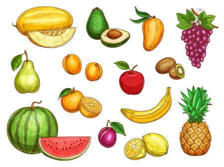 Wektor egzotycznych świeżych owoców izolowane zestaw ikon