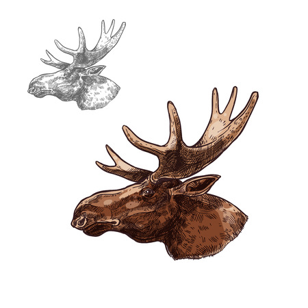 Moose elk muzzle profile vector isolated sketch