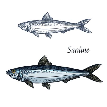 Sardine fish vector icône croquis isolé