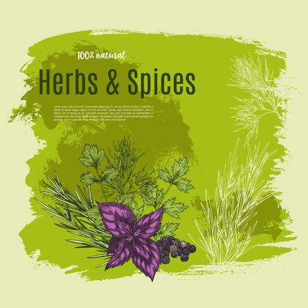 Vector épices naturelles et herbes affiche pour magasin Banque d'images - 81227188