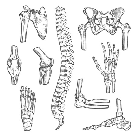 Ícones de esboço de vetores de ossos e articulações do corpo humano