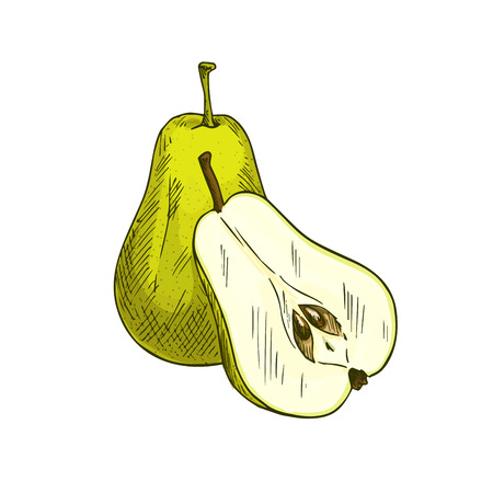 Pear fruits whole and sliced vector sketch icon