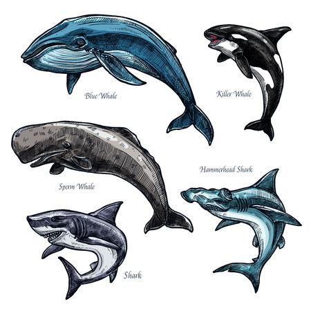 Gigantyczne zwierzęta morskie wieloryb i rekin wektor zestaw ikon