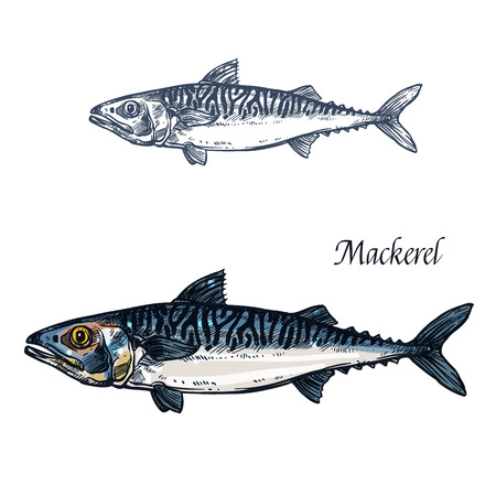 Makreel vis vector geïsoleerde schets pictogram