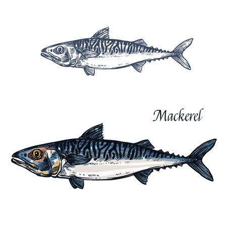 Mackerel fish vector isolated sketch icon