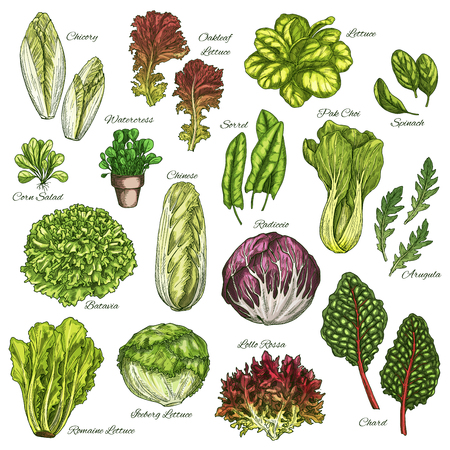 Vector sketch icons set of salads leafy vegetables