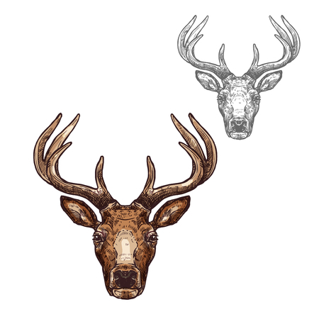 Deer ot reindeer muzzle vector isolated sketch