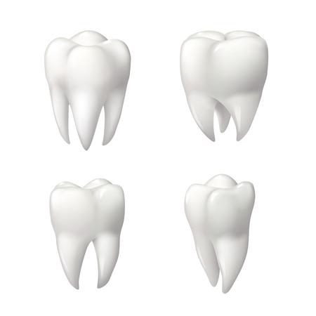 Tand geïsoleerde pictogramserie. Gezonde tanden 3d illustratie met wit email en wortel. Tandheelkunde, tandheelkundige gezondheidszorg, tandarts kantoor, mondhygiëne thema's ontwerp