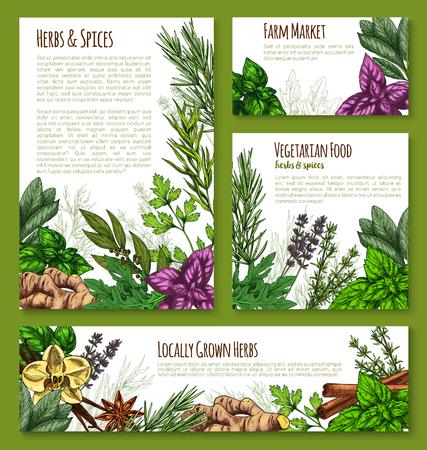 Herb, spice and leaf salad vegetable sketch banner template. Green basil, mint, rosemary, thyme, cinnamon, arugula, parsley, vanilla, ginger, anise, bay, sage, lavender for natural spice shop design