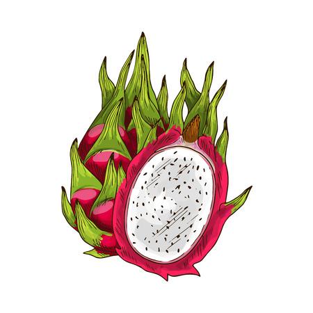 Dragon fruit geïsoleerd schets. Exotisch tropisch pitaya fruit met roze schil, wit vlees en groen blad. Rijpe pitahaya voor eten en drinken label, tropisch dessert of exotische sap verpakking design