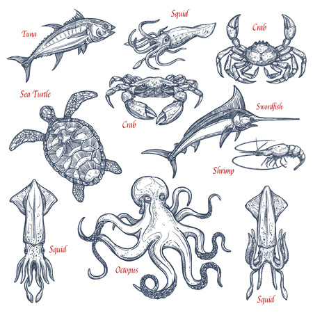 Sea animal isolated sketch set of seafood and fish