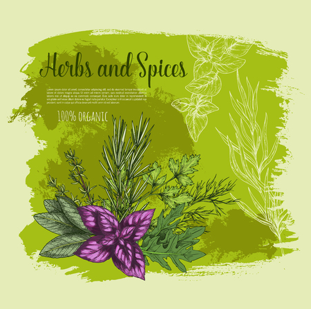 Herb and spice with fresh leaf sketch poster Illustration