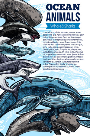 Whale and shark ocean animal sketch poster