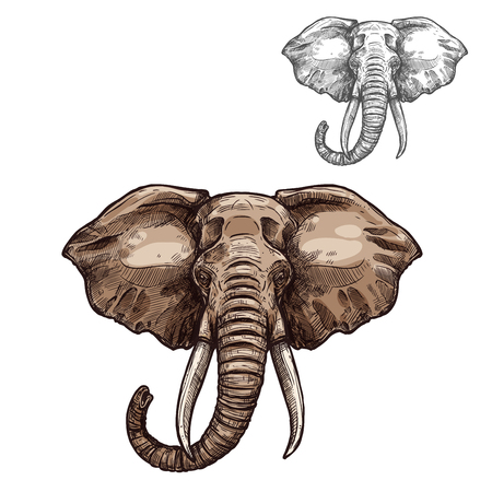 아프리카 포유 동물의 코끼리 고립 된 스케치