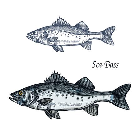 Schizzo isolato pesce branzino per la progettazione di frutti di mare Vettoriali