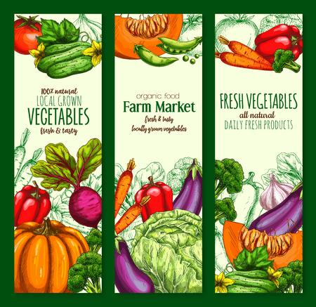 Vegetable, organic farm veggies sketch banner set