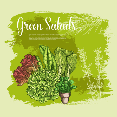 Vector poster of lettuce salads leafy vegetables