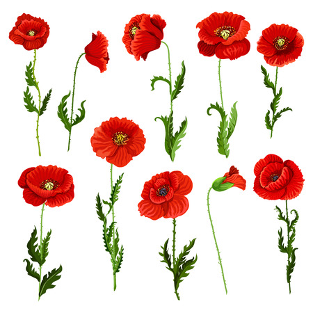 Poppy flowers icons set. Vector isolated botanical symbols of blooming red poppies blossoms. Floral bouquets or springtime flourish flowery bunches design for decor or holiday greetings template Ilustração