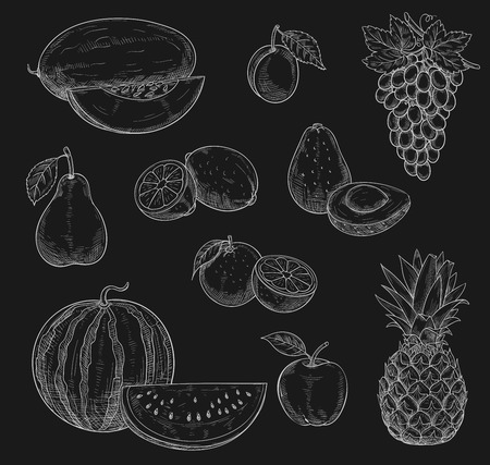 Exotic fruits chalk sketch icons on chalkboard. Vector isolated symbols of farm grown watermelon, melon and grape or tropical pineapple, apple and pear or papaya, orange or mango and avocado Çizim
