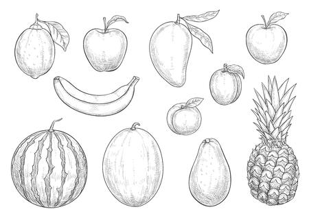 Verse exotische vruchten schets vector geïsoleerde pictogrammen Stock Illustratie