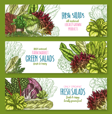 Salads leafy vegetables vector banners set Illustration