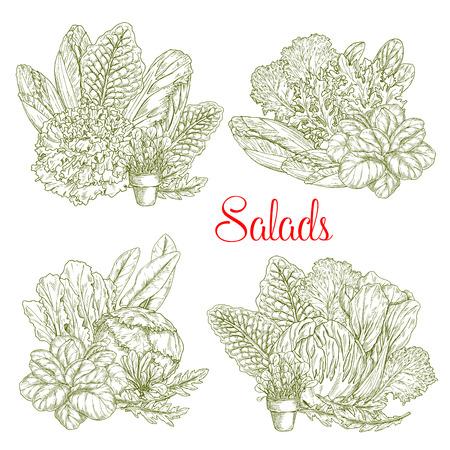 Sla Salades schets van witlof, waterkers of sorrel en Gotukola Collard.