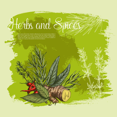 Vector spices and herbs seasonings poster Ilustração