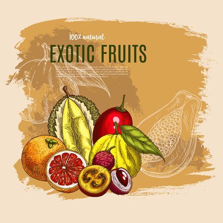 Vector exotic durian, mango, papaya fruits poster Иллюстрация