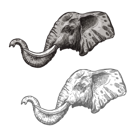 Elephant African wild animal vector sketch icon Illustration