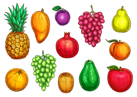 Vector isolated icons of exotic garden fruits Illustration