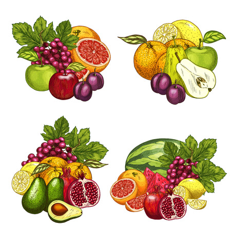 Fruits bunches icons set. Vector farm harvest of red grape, watermelon or melon, juicy plum or kiwi and exotic avocado and tropical grapefruit, garden apple, apricot or pear and peach or pomegranate Illustration