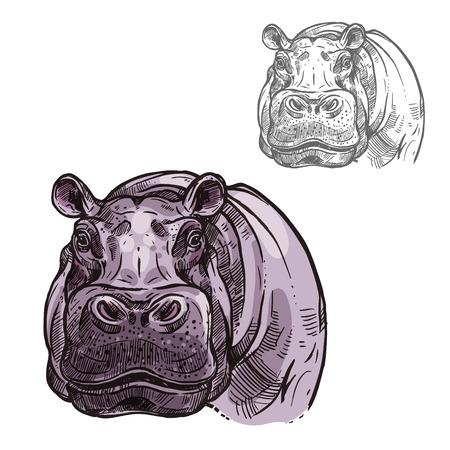 Icône de croquis tête ou museau d'hippopotame hippopotame. Mammifère sauvage africain isolé de l'animal hippopotame pygmée pour la zoologie, blason de mascotte de l'équipe sportive, nature savane de la faune Banque d'images - 83069630