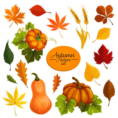 Autumn vector icons of leaf fall and harvest Иллюстрация