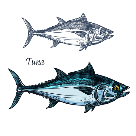 Tuna fish vector isolated sketch icon