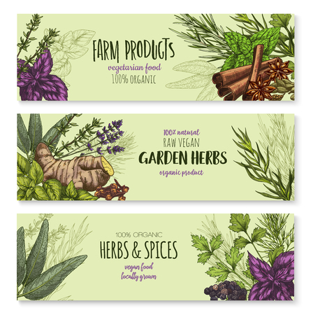 Vector banners set of natural spices and herbs Ilustrace