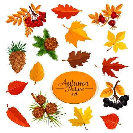 Herfst vector iconen van blad val of bos bessen