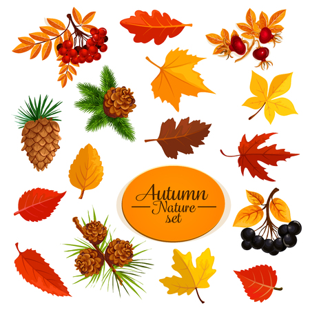 Autumn vector icons of leaf fall or forest berry Illustration