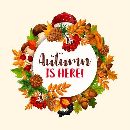 rowanberry: Autumn frame of fallen leaf, fruit, mushroom Stock Photo