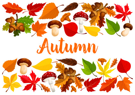 Autumn poster template of nature tree leaf fall and seasonal mushrooms amanita and forest cep. Vector design of oak acorn, falling leaves of maple, aspen or elm and poplar for autumn greeting card Çizim
