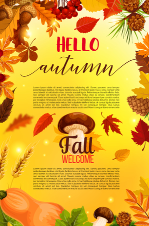 Hello autumn banner with fall nature frame. Orange maple leaves, pumpkin vegetable, forest tree foliage, acorn branch, mushroom, rowanberry fruit, pine cone with ribbon banner for Thanksgiving design