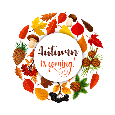 Autumn poster of fall nature season. Yellow maple leaf, orange foliage of chestnut, oak and birch, forest mushroom and berry, rowanberry fruit branch and pine cone placed in circle for autumn design Illustration